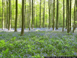 Sunlight through forest, blue flowers